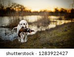 Dog carrying a dead duck in its mouth by a lake.