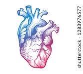 human heart in engraving... | Shutterstock .eps vector #1283976577