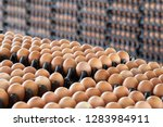 egg panels arranged on a... | Shutterstock . vector #1283984911