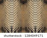 snake skin pattern | Shutterstock .eps vector #1284049171