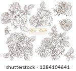 set of vector sketch roses....   Shutterstock .eps vector #1284104641