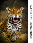 roaring adult female jaguar... | Shutterstock . vector #128418191