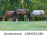 Stock photo heard of horses in a meadow chestnut horse brown horse and red roan horse in a meadow 1284201184