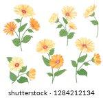 flower calendula bouquet... | Shutterstock .eps vector #1284212134