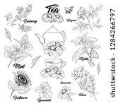 tea herbs botany plants outline ... | Shutterstock .eps vector #1284266797