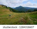 herd of cattle grazing on a... | Shutterstock . vector #1284318607