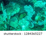 a wolf eel hiding in some coral ... | Shutterstock . vector #1284365227
