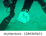 a small spider like crab in the ... | Shutterstock . vector #1284365611