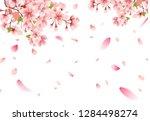 cherry blossom sakura on white... | Shutterstock .eps vector #1284498274