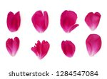 Stock photo red peony petals isolated on white background set 1284547084