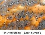 beautiful close up detail of... | Shutterstock . vector #1284569851