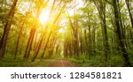 beautiful nature in the morning ... | Shutterstock . vector #1284581821