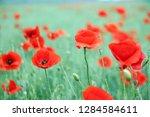 poppies flowers field landscape ... | Shutterstock . vector #1284584611