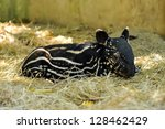 Young Tapirs Have Brown Hair...