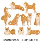 set of cute shiba inu in... | Shutterstock .eps vector #1284631441
