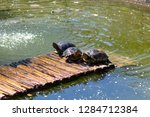 turtles in the sun on the lake ...   Shutterstock . vector #1284712384