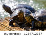 turtles in the sun on the lake ...   Shutterstock . vector #1284712387