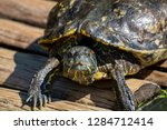 turtles in the sun on the lake ...   Shutterstock . vector #1284712414