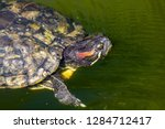 turtles in the sun on the lake ...   Shutterstock . vector #1284712417