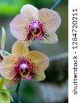 orchid in the botanical garden...   Shutterstock . vector #1284720211