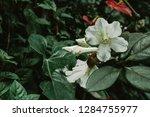closeup of wild exotic tropical ...   Shutterstock . vector #1284755977