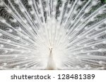 White Peacock With Feathers Ou...