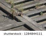 wild birds living in urban... | Shutterstock . vector #1284844111