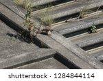 wild birds living in urban... | Shutterstock . vector #1284844114