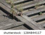 wild birds living in urban... | Shutterstock . vector #1284844117