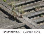 wild birds living in urban... | Shutterstock . vector #1284844141