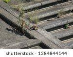 wild birds living in urban... | Shutterstock . vector #1284844144