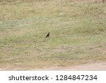 sturgeon living in an urban... | Shutterstock . vector #1284847234
