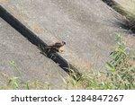 sturgeon living in an urban... | Shutterstock . vector #1284847267