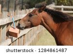 a horse nibbling from a mineral ... | Shutterstock . vector #1284861487