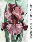 hand drawn watercolor iris....   Shutterstock . vector #1284875704