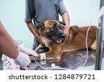 veterinarian is giving dog a... | Shutterstock . vector #1284879721