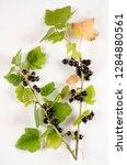 black currant botanical board   Shutterstock . vector #1284880561