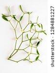 boom botanical board   Shutterstock . vector #1284881227