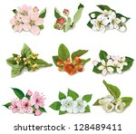 Set Of Flowers On Fruit Trees...