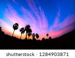 toddy palm on sunrise | Shutterstock . vector #1284903871