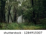 green forest background  lush... | Shutterstock . vector #1284915307