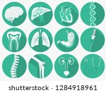 internal human organs set ... | Shutterstock .eps vector #1284918961