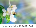 spring flower with blossom and...   Shutterstock . vector #1284921061