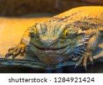 lizard head close up | Shutterstock . vector #1284921424