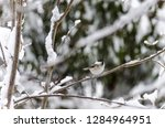 beautiful background with gray... | Shutterstock . vector #1284964951