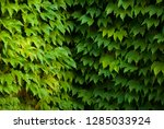 garden  leaf texture | Shutterstock . vector #1285033924