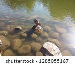 bird sleeping on a rock | Shutterstock . vector #1285055167