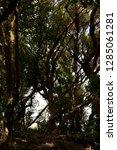 trees in subtropical rainforest ... | Shutterstock . vector #1285061281