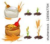 wheat  oats and barley set....