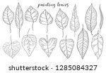 leaves graphic set. hand drawn... | Shutterstock .eps vector #1285084327